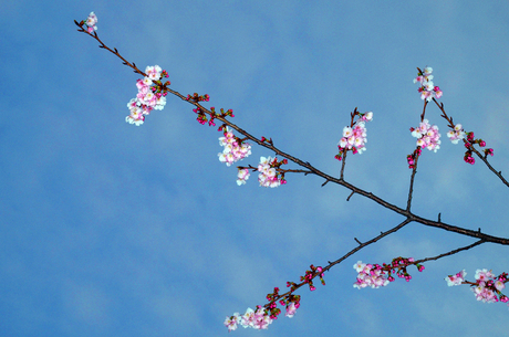 Spring22